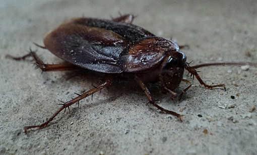 zwalczanie insektów